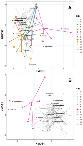 Non-metric multidimensional scaling (NMDS) of Phytophthora species abundance data (A) and Phytophthora species presence/absence data (B) (Bray–Curtis dissimilarity matrix, with centring and Wisconsin square-root transformations, two of three axes), with 'ordispider' plots showing the significant effect of site on the distances (permANOVA, (F13,98 = 2.93, p < 0.001, abundance data; F13,98 = 2.92, p < 0.001, presence/absence data)).