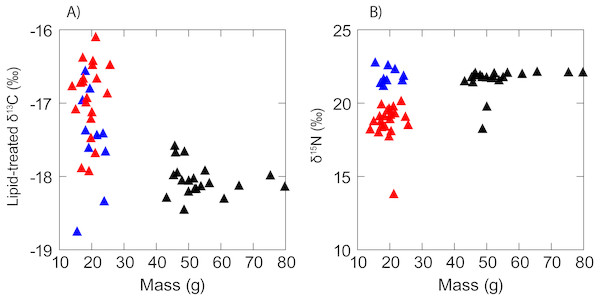 Scatterplot showing a lack of any obvious relationship between (A) δ13C and (B) δ15N and fish mass in anchovy (low δ15N = red triangles; high δ15N = blue triangles) and juvenile jack mackerel (black triangles).