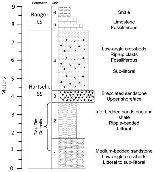 Geologic column of the upper portion of Hartselle Sandstone exposure at Fielder Ridge, Colbert County, Alabama.