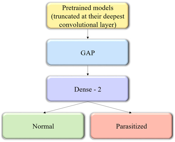 The custom architecture of pretrained models used in this study.