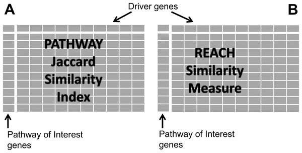Similarity matrices.