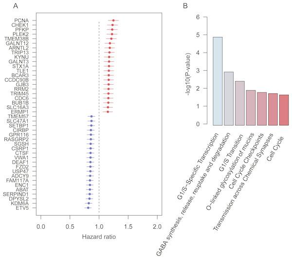 Prognostic genes identified by meta-analysis-based Cox regression analysis.