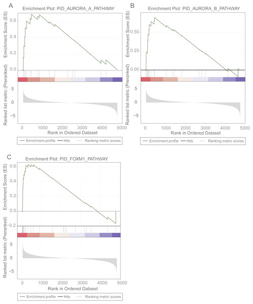 Prognostic pathways identified by gene set enrichment analysis (GSEA).