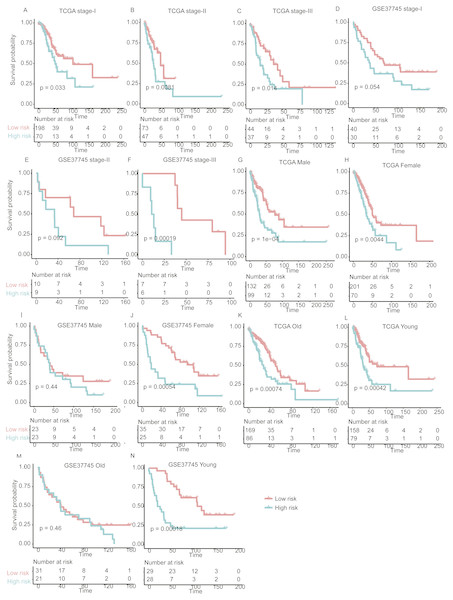 The performance of the prognostic model within TNM stages, age and gender group in the validation set.