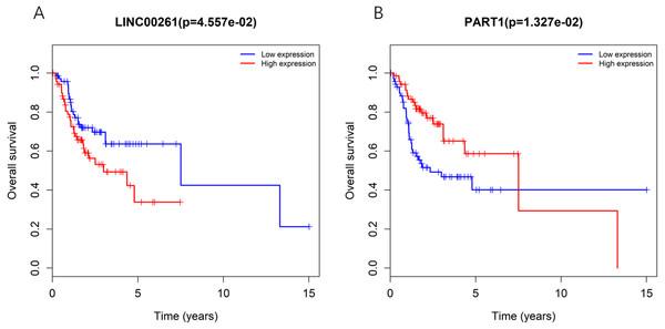 Kaplan-Meiercurve analysis of DElncRNA (A: LINC00261 and B: PART1) inTSCC patients.