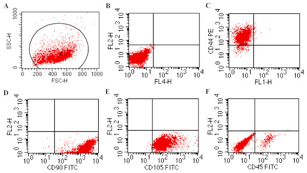 Cytometry results of BMSCs.