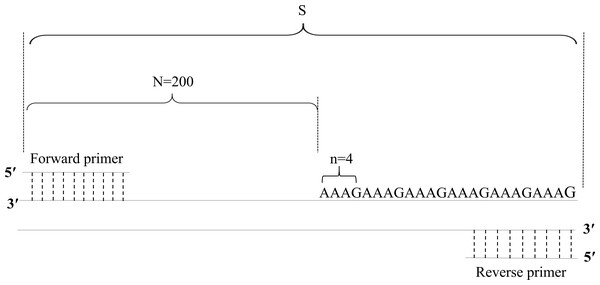Diagram of the method of calculation of copy numbers, with the FGA locus as an example.