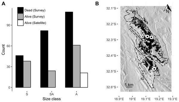 Clanwilliam cedar size class distribution and tree localities.