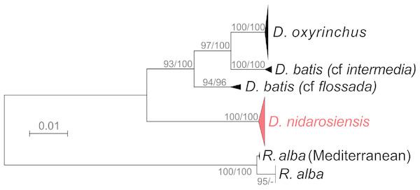Phylogenetic tree.