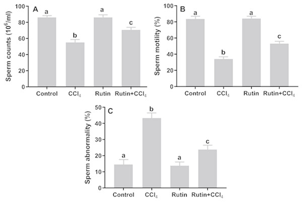 Sperm parameters in male rats after administration of CCl4 and/or rutin.