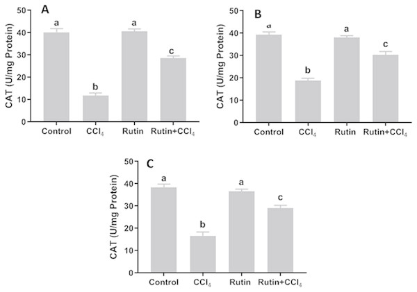 Tissue catalase (CAT) level in male rats after administration of CCl4 and/or rutin.