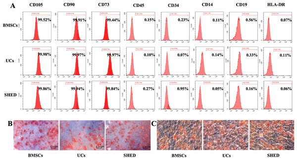 Characterization of hUCMSCs, hBMSCs and hSHED.