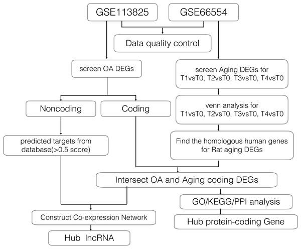 Workflow of the bioinformatics analyses.