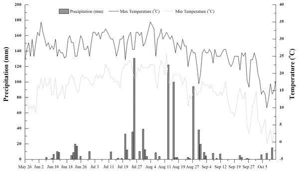Daily mean air temperature and precipitation in the study area during the rice growing season (June to October 2016).