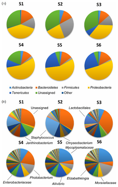 Composition of the bacterial community in the skin mucus.