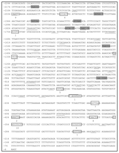 Analysis of the PsDREB2 promoter sequence using the PlantCARE database.