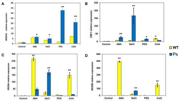 Expression patterns of DREB1A, CBF1, RD29A, RD29B in Arabidopsis plants with the PsDREB2 promoter controlled by wild-type Arabidopsis plants under various stress treatments.