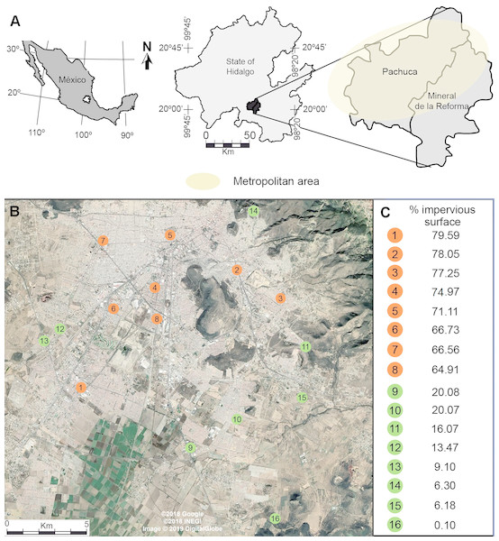 (A) Location of the metropolitan area of Pachuca in the state of Hidalgo, Mexico and (B) the sites where honey bees were collected. (C) The percentage cover of impervious surface at each site is presented on the right for urban (orange) and rural (green) sites; percentages were calculated in 500 m radius buffers centered at each collecting site.