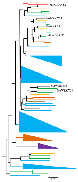 Phylogenetic tree of 81 group III WRKY proteins from drumstick and other seven species.