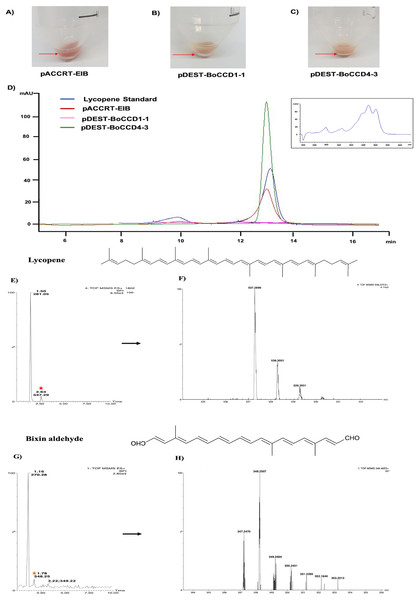 Analysis by HPLC, UHPLC, and MS.