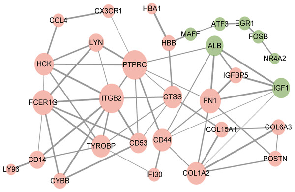 Protein–protein interaction network of overlapped differentially expressed genes.