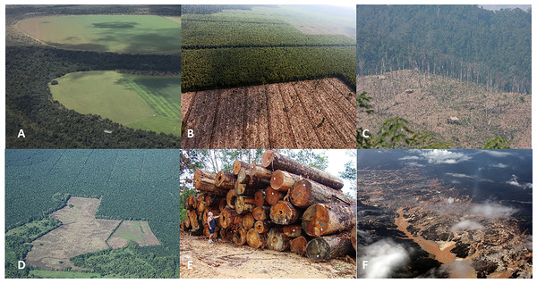 Photos of selected forest-risk commodities in primate range regions.