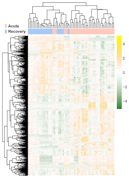 The lustering heatmap based on the expression levels of the differentially expressed RNAs (DE-RNAs).
