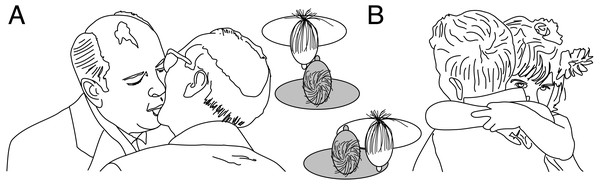 Examples of left kissing (A) and right hugging (B).