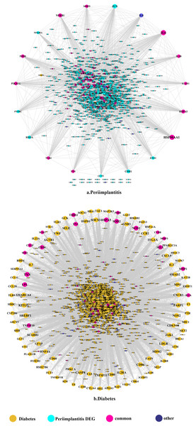 The PPI network of DEGs expressed in peri-implantitis (A) and PPI network of genes related to type 2 diabetes (B).
