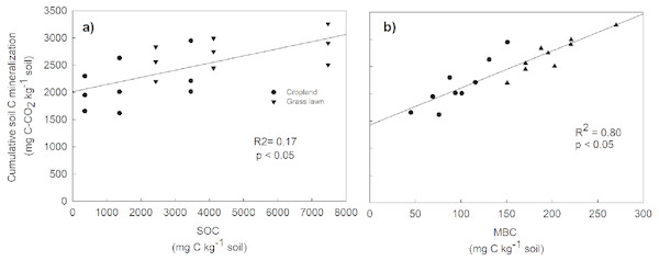 Relationship between cumulative soil C mineralization and soil organic carbon (SOC) (A), and microbial biomass carbon (MBC) (B), across the two land use types and three soil layers.