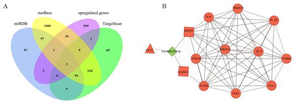 Construction of ceRNA network in pulpitis.