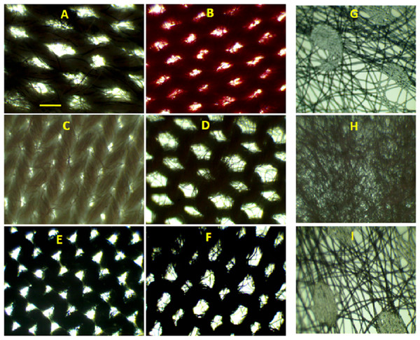 Bright field microscopic images of mask surfaces.