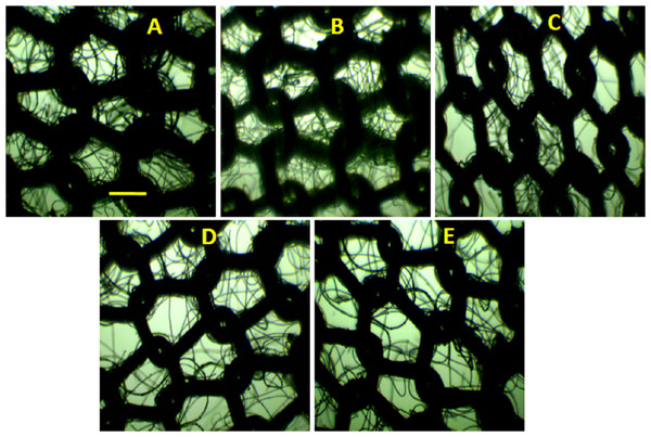 Optical images after washing and drying cycles.