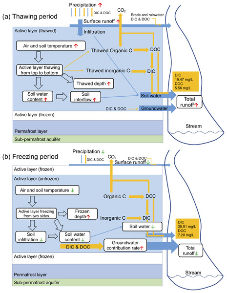 Conceptual diagrams of riverine carbon export in thawing (A) and freezing (B) period.