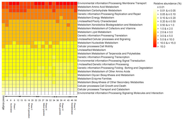 Heatmap with the functionality of bacterial communities predicted with the Kyoto Encyclopedia of Genes and Genomes (KEGG) as detected in the different phases in the sequencing batch reactor used in this study.