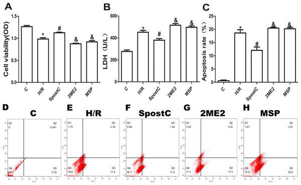 SpostC alleviated cell hypoxia-reoxygenation injury.