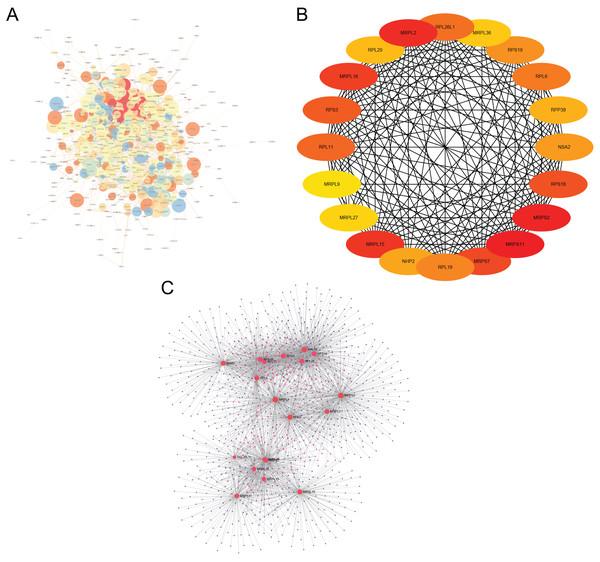 Major depressive disorder-specific network.