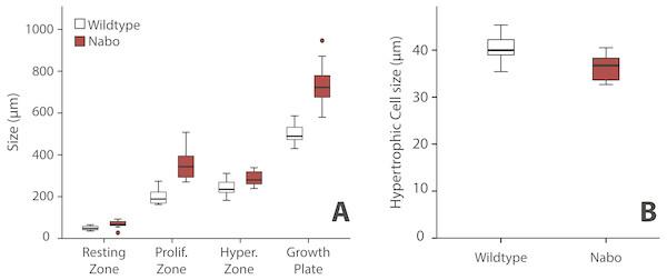 Growth plate histomorphometry.