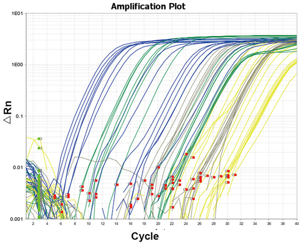 Amplification curve of quantitative real-time PCR.