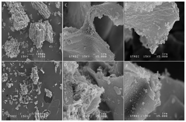 SEM analysis of S-GalMan and G-GalMan.