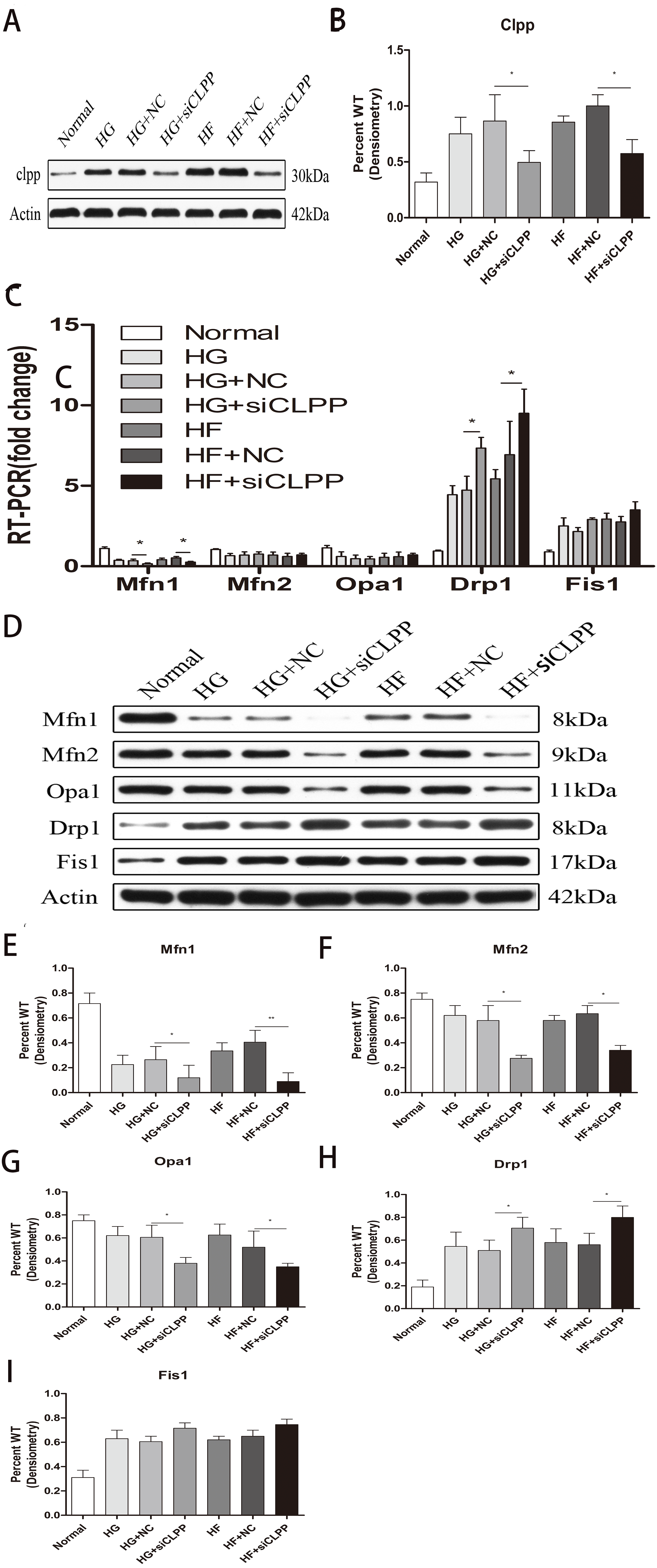 Mitochondrial unfolded protein response gene CLPP changes