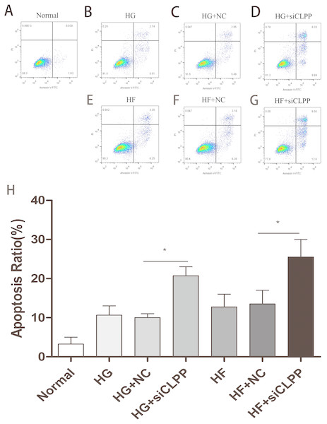 Cell apoptosis was analyzed by Annexin V assays followed by flow cytometry.
