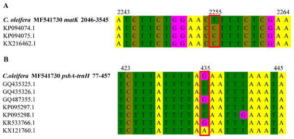 Base sequence alignment of matK gene and trnH-psbA intergenic region between different C. oleifera.