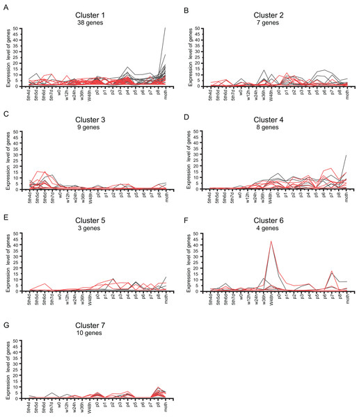 Cluster analysis of BmZNF gene expression in both sexes.