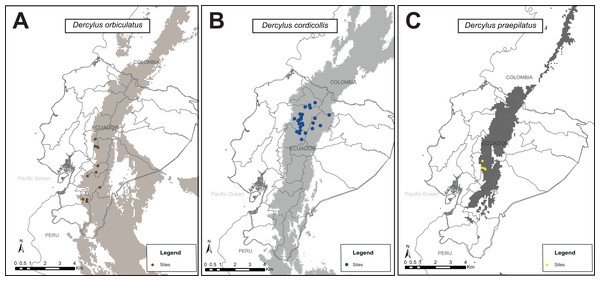 Maximum entropy models for present distribution for species in the genus Dercylus across the Ecuadorian Andes using five bioclimatic variables. (