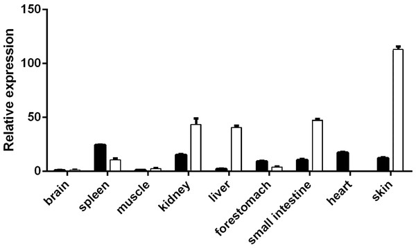 Expression spectrum of VDR in different tissues at E60 and E120.