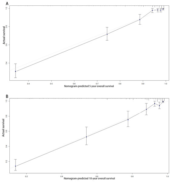 Calibration curves of the nomogram-predicted 5-year (A) and 10-year (B) overall survival.