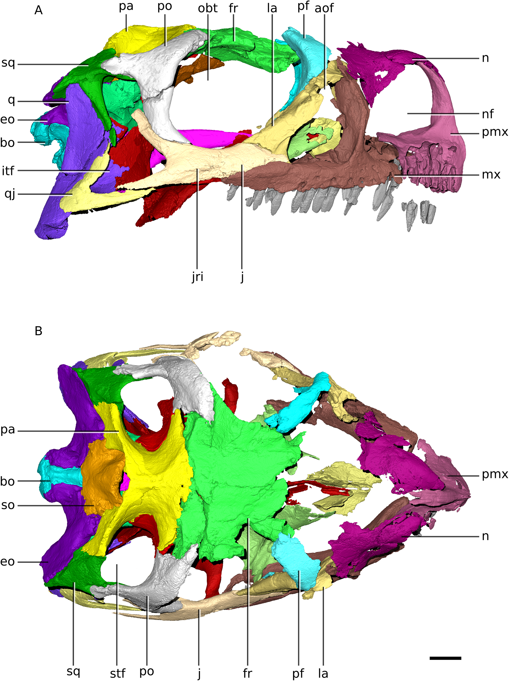 Ngwevu intloko: a new early sauropodomorph dinosaur from the