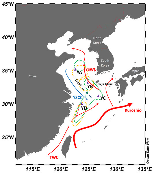 Schematic map of winter currents in the Yellow Sea and East China Sea.