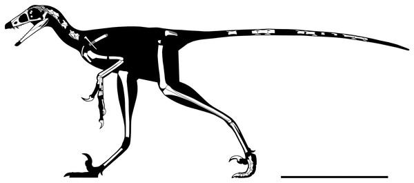 Rigorous skeletal reconstruction of WYDICE-DML-001.